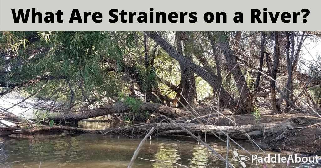 What Are Strainers on a River - Fallen trees on a riverbank