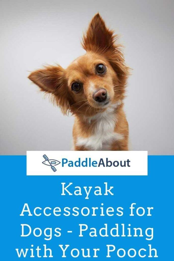 Kayak accessories for dogs - Cute dog