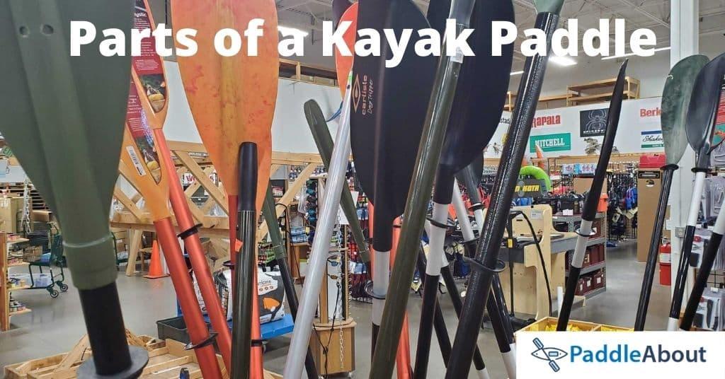Parts of a Kayak Paddle - Kayak paddles on display